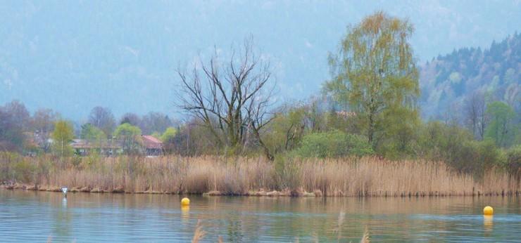Die Ringseeinsel, die Hagn als Vorbild einer Buhne für die Schwaighofbucht dient.