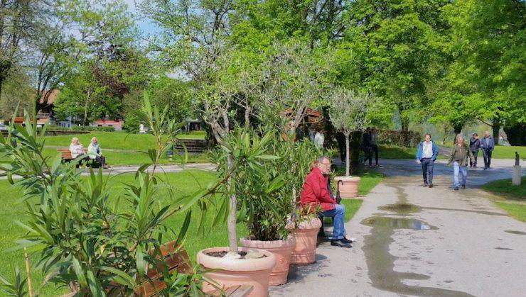 """""""Noch zieren südliche Gewächse wie Olivenbäume und Oleander die Uferpromende"""" """"Olivenbäume und Oleander sollen aus dem Ortsbild verschwinden"""""""