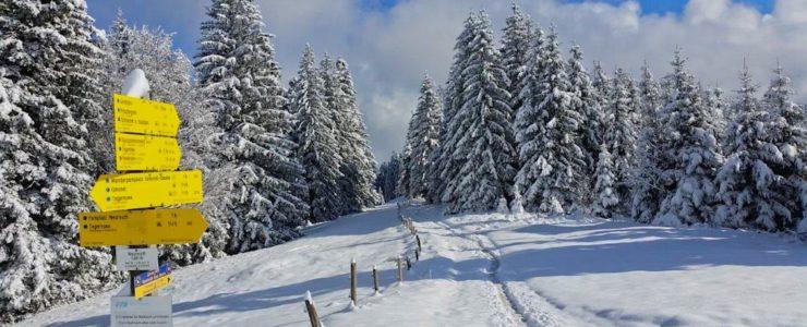 Vorfreude auf den Winter