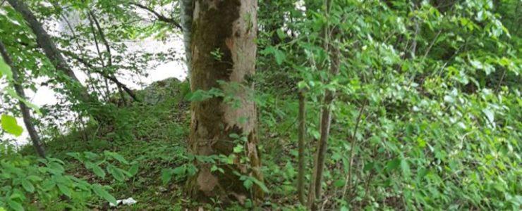 Menschenkot entlang der Popperwiese