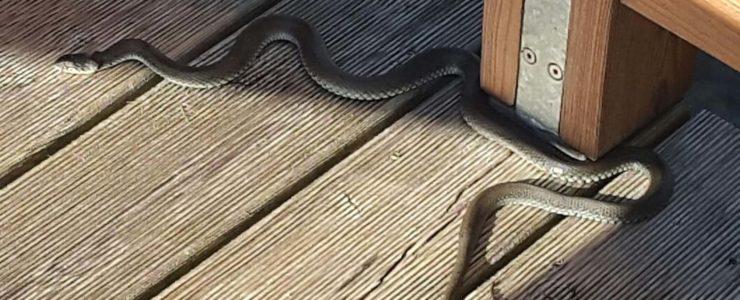 Wenige Verletzte, dafür eine Schlange